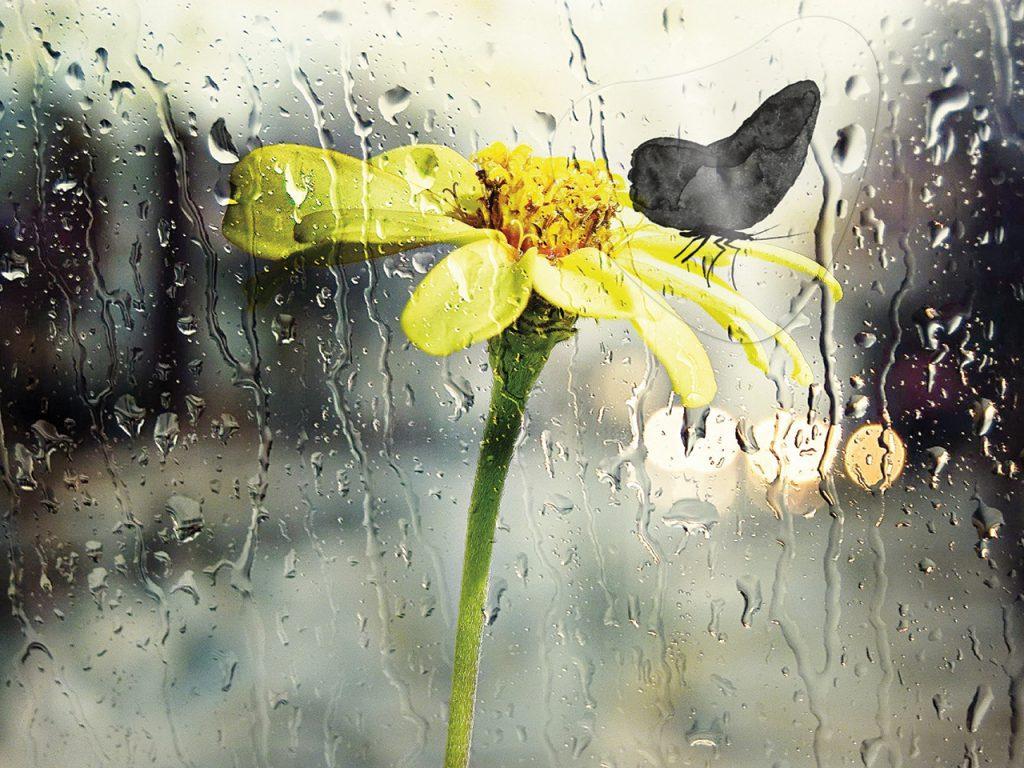 MarioMa-farfalla